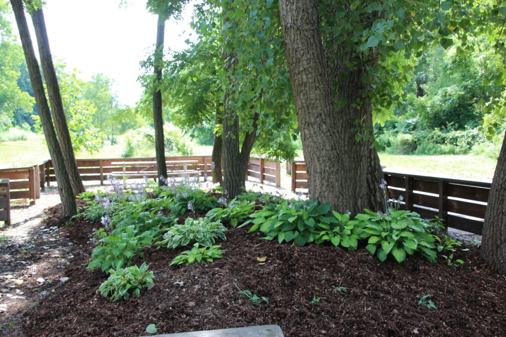[Hosta Garden at Rochester Junction]